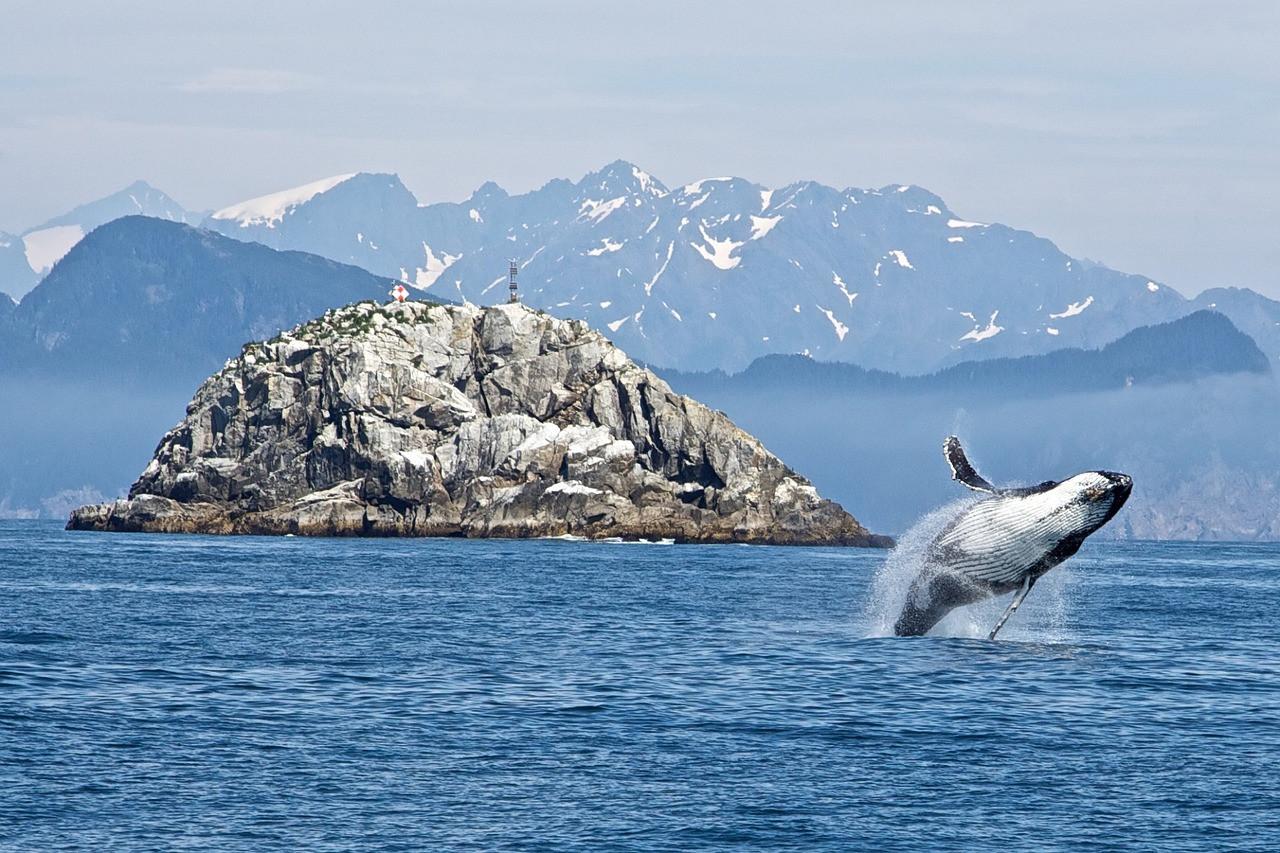 humpback-whale-1744267_1280 - Champlain