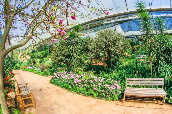 benches-blue-botanical-736782 - Champlai
