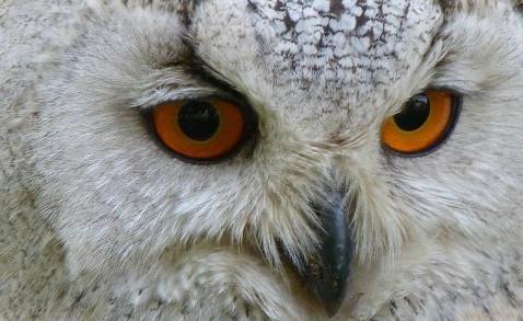 owl-62703_1920-770x293.jpg