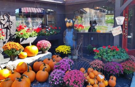 pumpkins-and-flowers-500x281.jpg