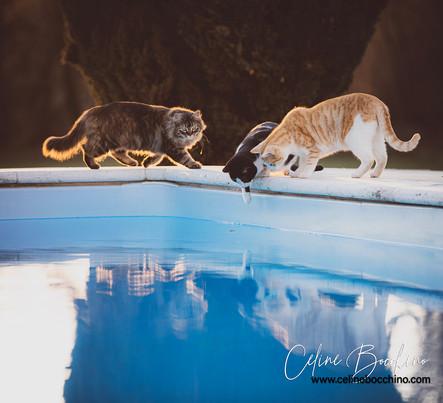 Chats au bord de l'eau