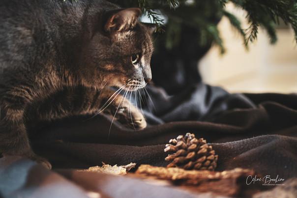 chat en interieur