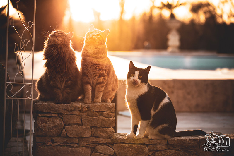 Chats en exterieur au couché du soleil