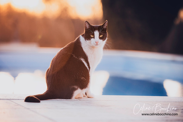 Chat au bord de l'eau