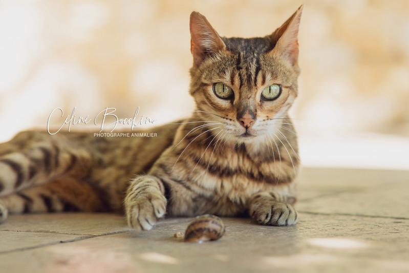 chat en exterieur