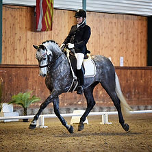 Championnat D'Europe - Eclipse N
