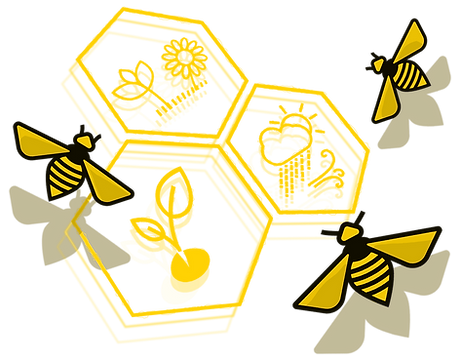 abejas-panal_edited.png