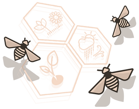 abejas-panal_edited_edited.png