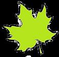 Ahornblatt-gr%C3%BCn_edited.png
