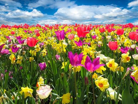 The Inner Alchemy of Spring