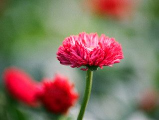 The Meaning of Flowers | A Thoughtful Way to Choose