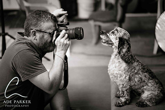 Dog Photoshoot in action