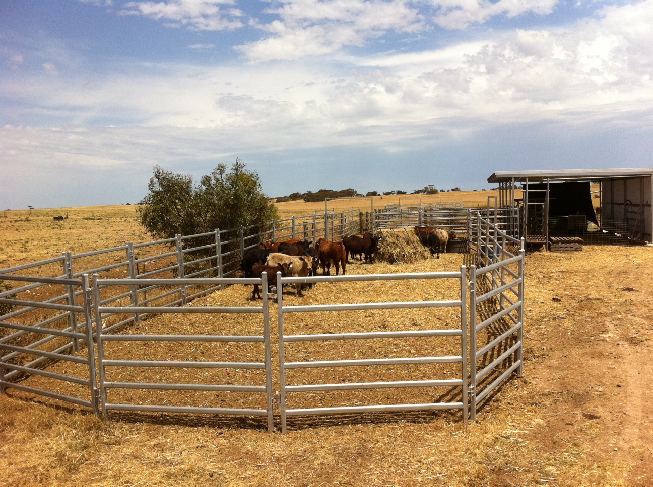 Senturion-Steel-Supplies-Cattle-Panels-0