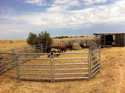 Senturion-Steel-Supplies-Cattle-Panels-0