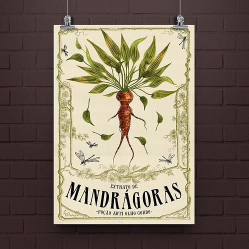 Poster Mandrágora