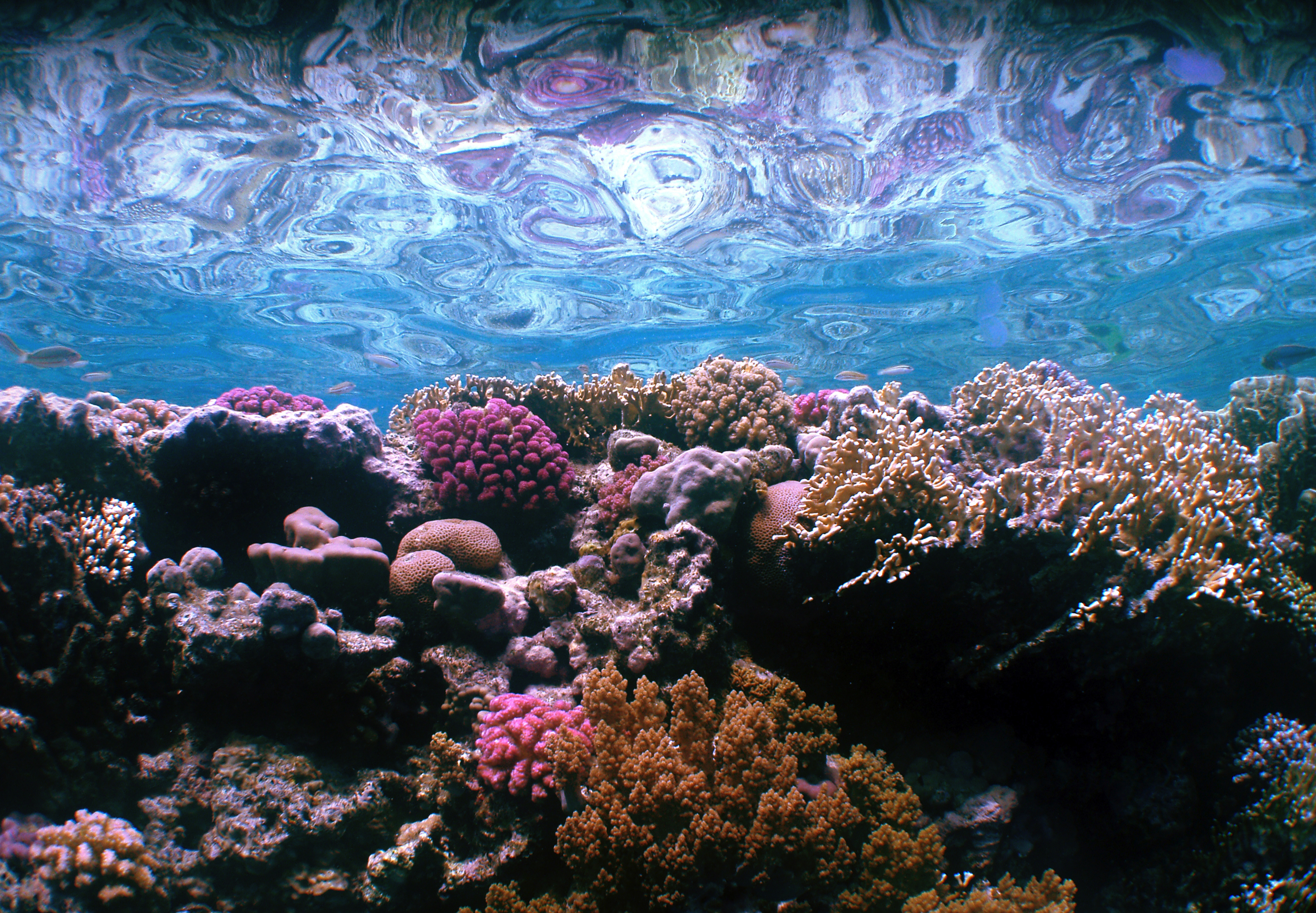 Coralreef49x69cm