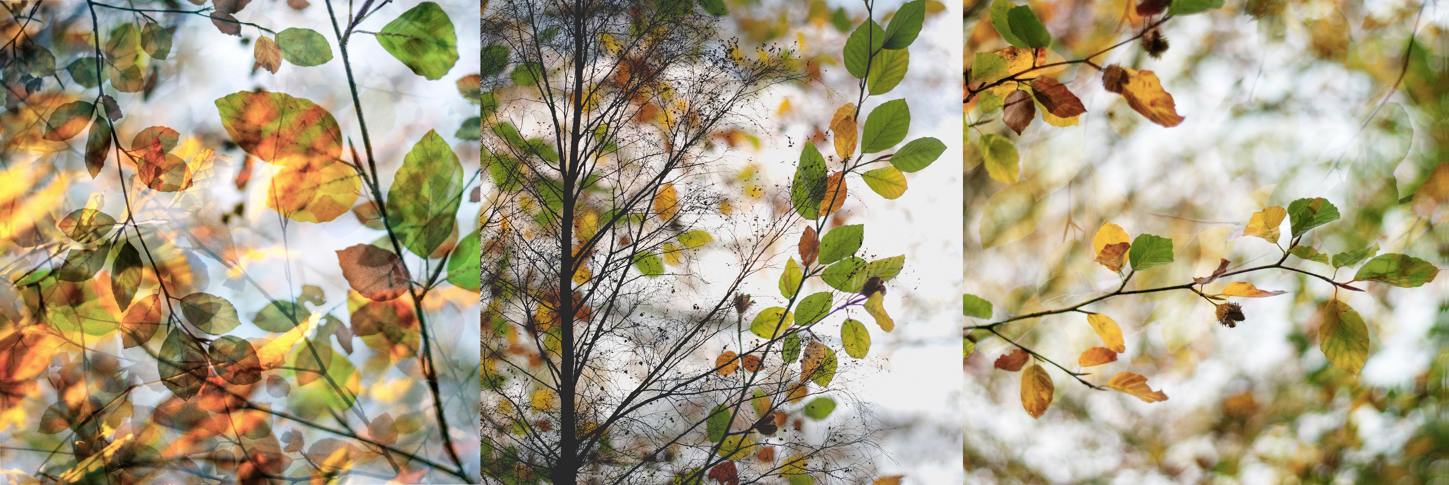 autumn_3edit