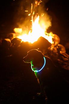 Campingdoge.jpg