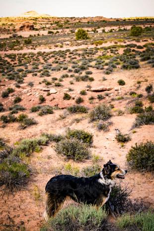 Desert Pup