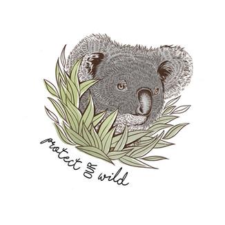 Protect Our Wild Koala