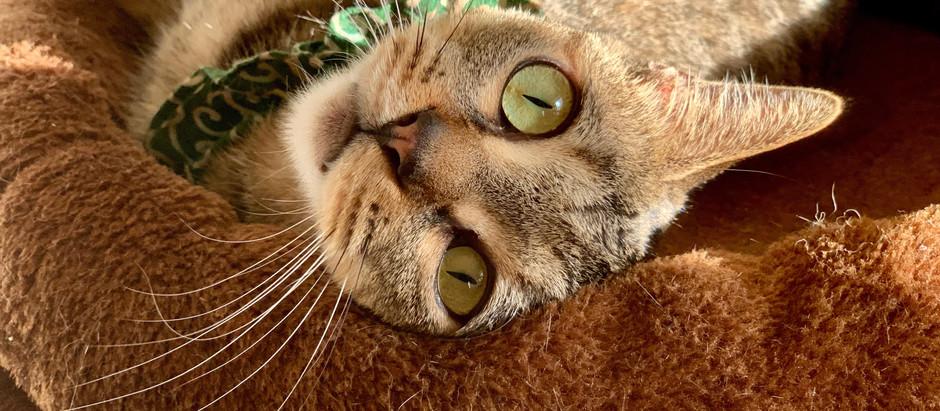 物書きには猫を薦める。