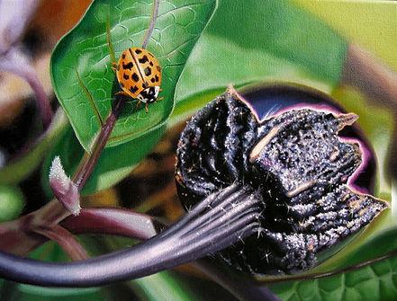 ladybug.jpg