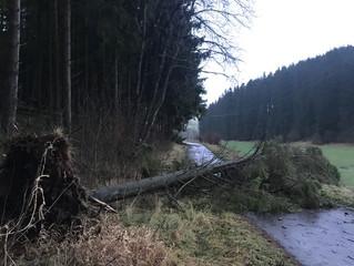Sturmschäden im Hallschlager Gemeindewald