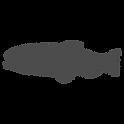 Fatty Acids - Fish transparent.png