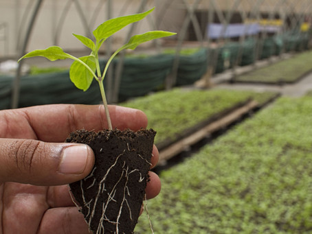 Pour réduire de moitié l'usage de pesticides d'ici 2025, un réseau de fermes s'engage