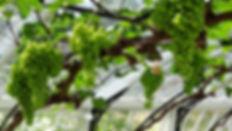 Vine-House.jpg