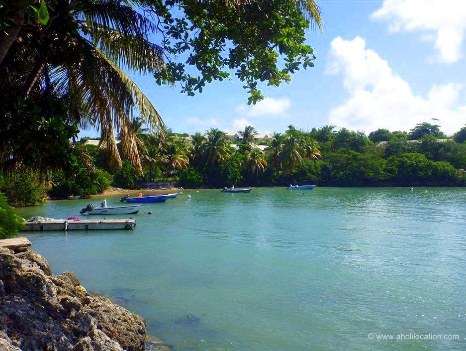 Anoli Location_Saint Felix_Guadeloupe
