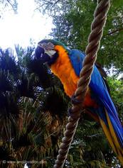 Anoli Location_Jardin botanique_Perroque