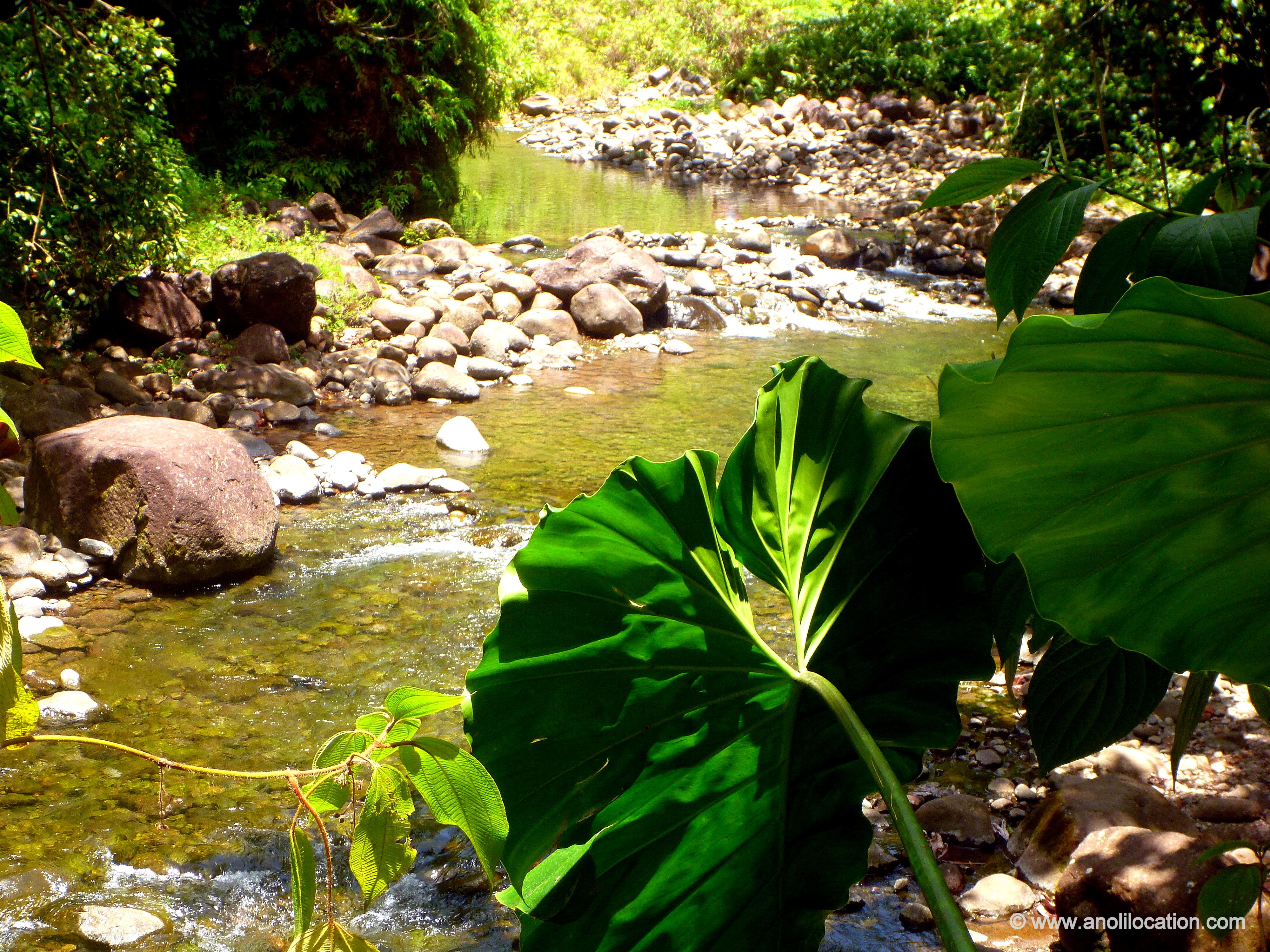 Anoli Location_Riviere Corossol_Basse Terre_Guadeloupe