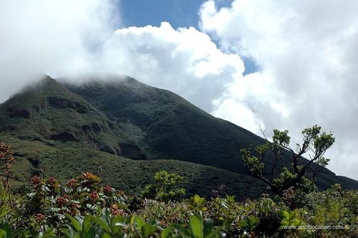 Anoli_Location_Soufrière_Guadeloupe.jpg