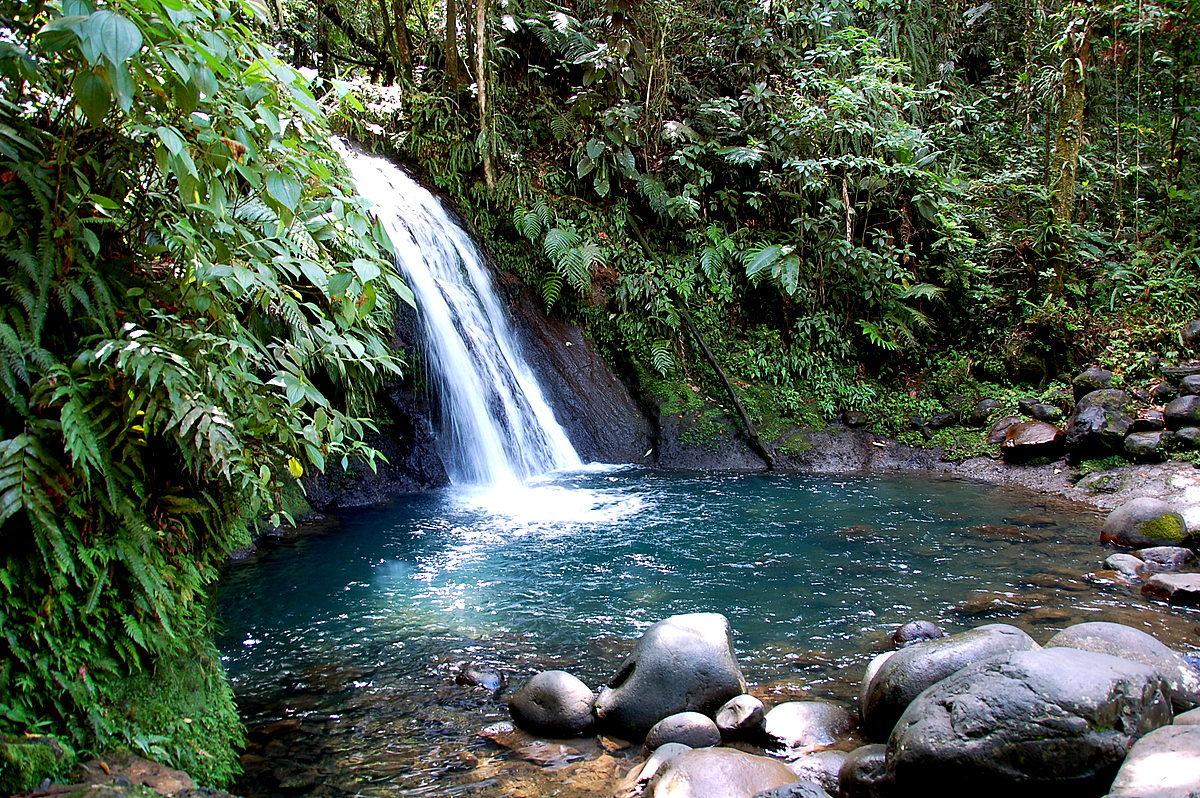 Anoli_Location_Cascade_aux_écrevisses_Guadeloupe