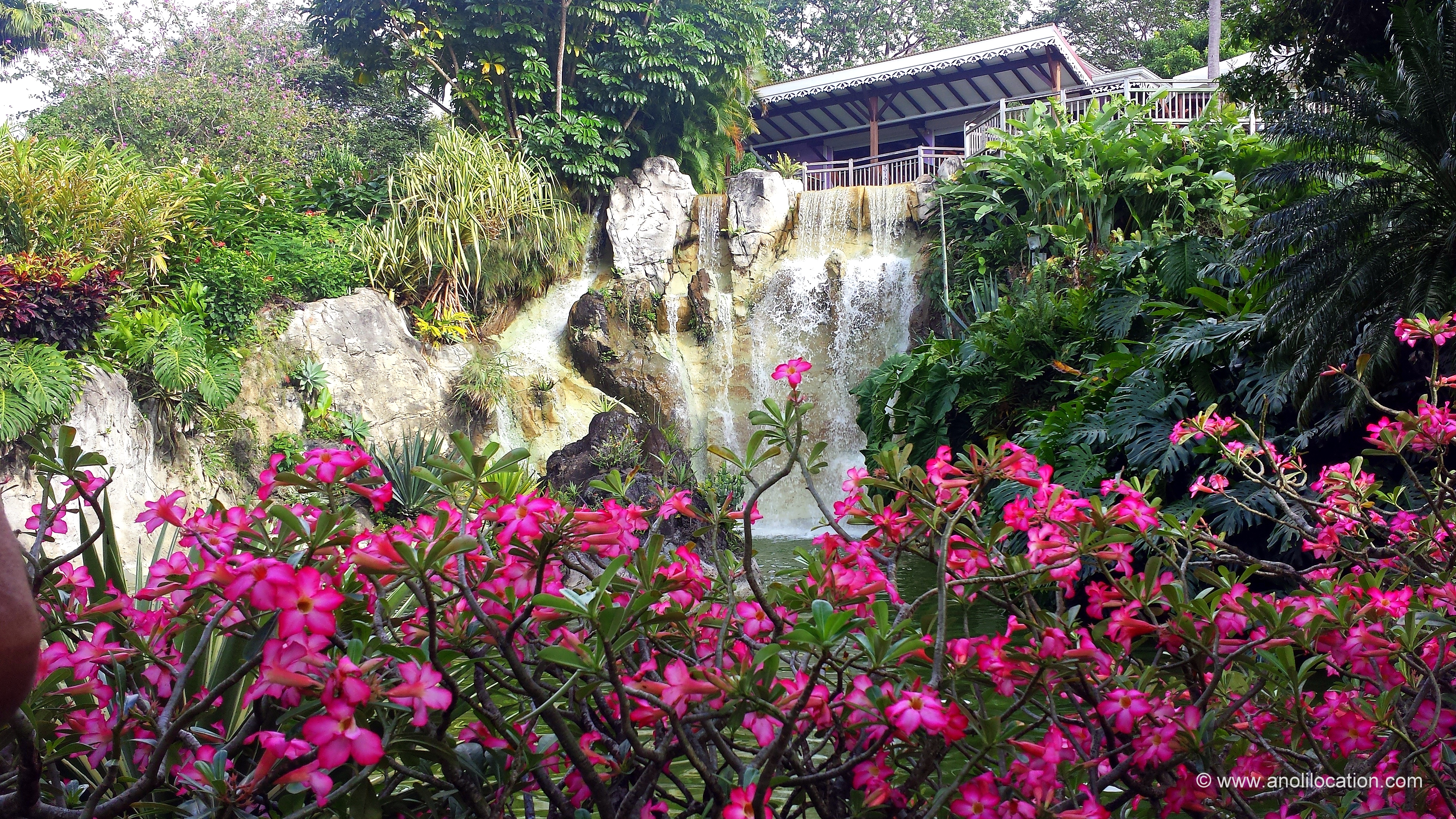 Anoli Location_Cascade Jardin Botanique_Guadeloupe