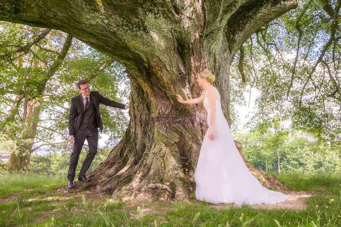 Brautpaar unter der Weide