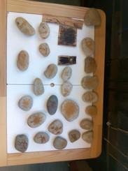 INFANTIL: Proyecto prehistoria