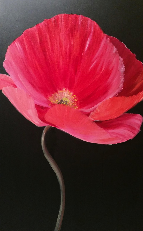 red poppy 3