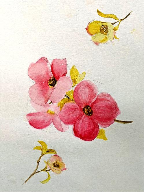 Dogwood Flower Watercolour