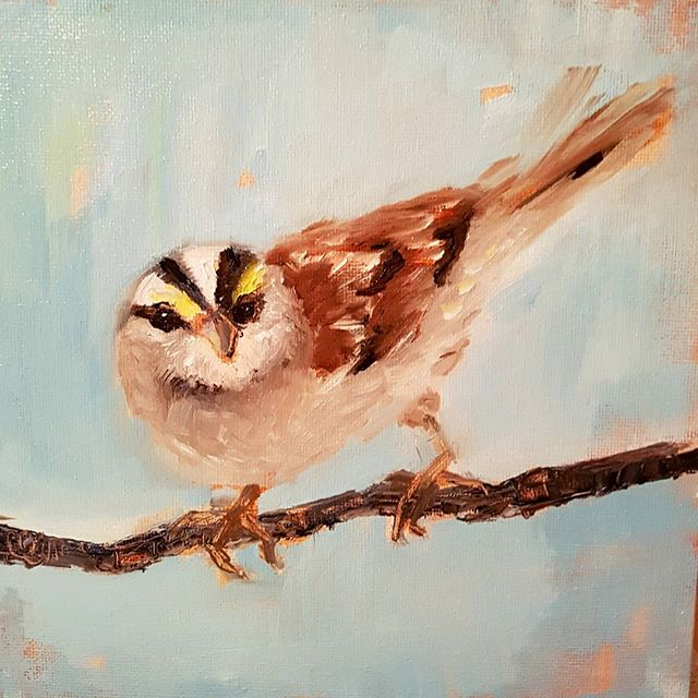 _Sparrow Study_ 8x8 oil on board #11 of my January challenge