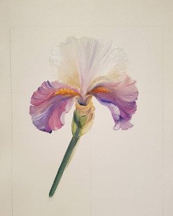 Iris Study 12_x18_ oil on paper.jpg #17 of my daily painting challenge