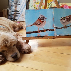 A friend for the sparrow...and the cocker spaniel. _Sparrow Study 2_ 8_x8_ oil on board