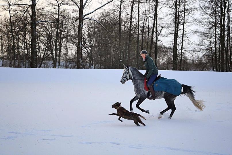 DasLandgut Reiten im Schnee