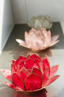 Landgut Schönwalde Indien Lotus