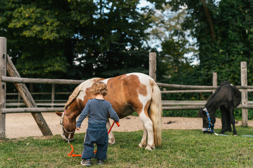 Das Landgut Ponys