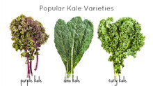 Kale by Comparison
