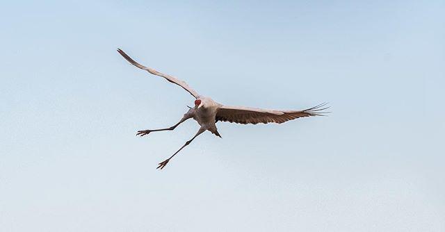 __ Prehistoric Sand Stork __ ___________