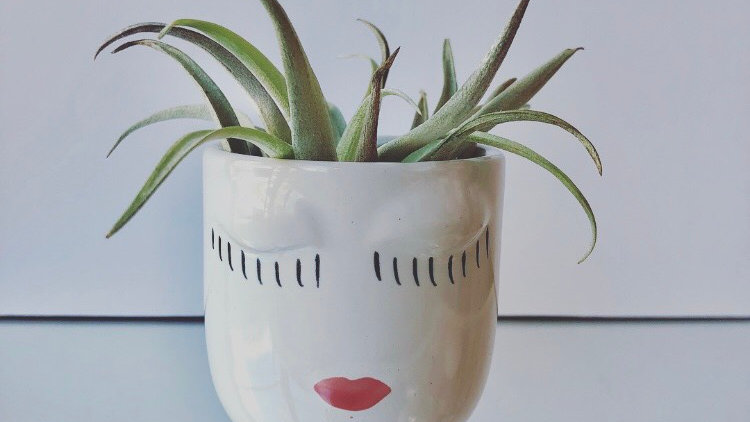 Small Face Vase with Air Plant