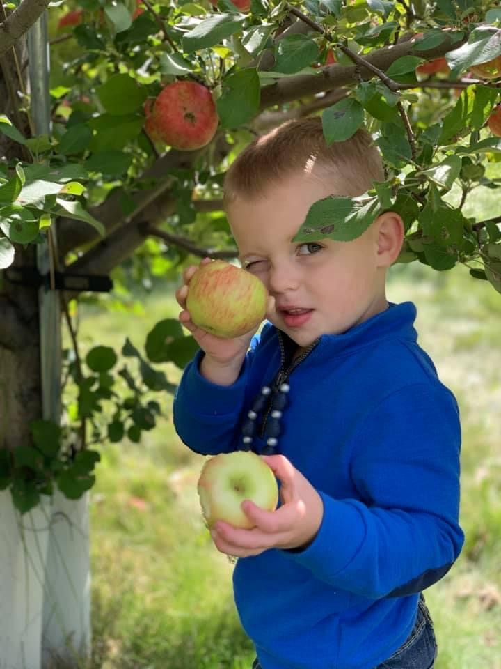 Nolan_Apple_Picking.JPG